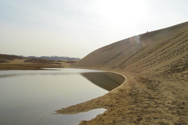 鳥取砂丘のオアシスが綺麗