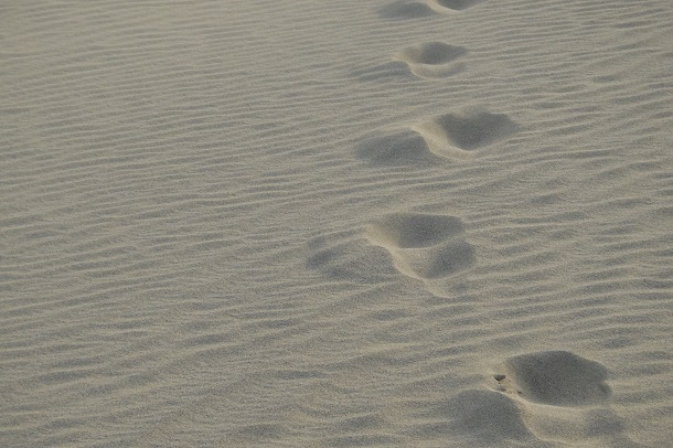 鳥取砂丘に現れた風紋と足跡