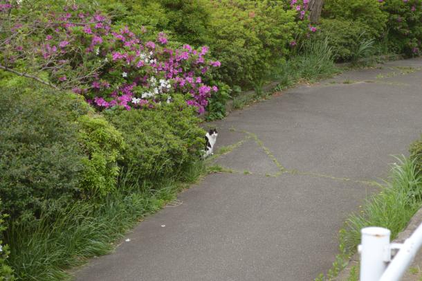 耳すまに出てくる猫のムーンにそっくりな野良猫発見