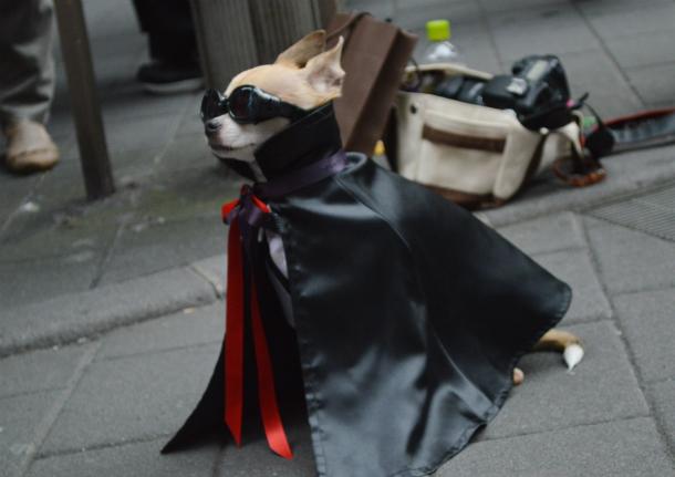 池袋 ハロウィン 犬