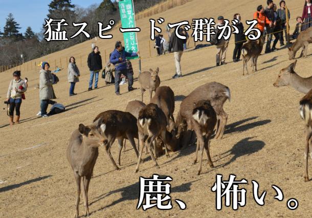 鹿せんべい飛ばし大会 奈良