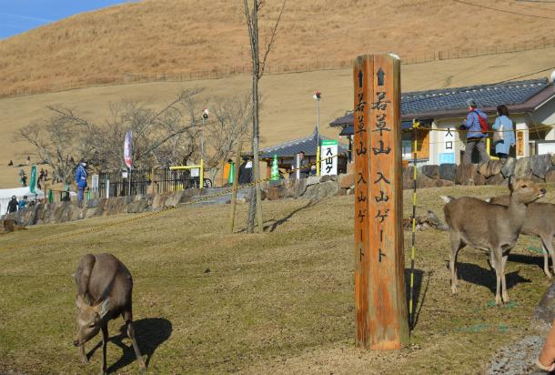 鹿せんべい飛ばし大会 奈良 若草山