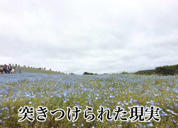 曇りの日かつシーズン最終日のネモフィラの丘の現実