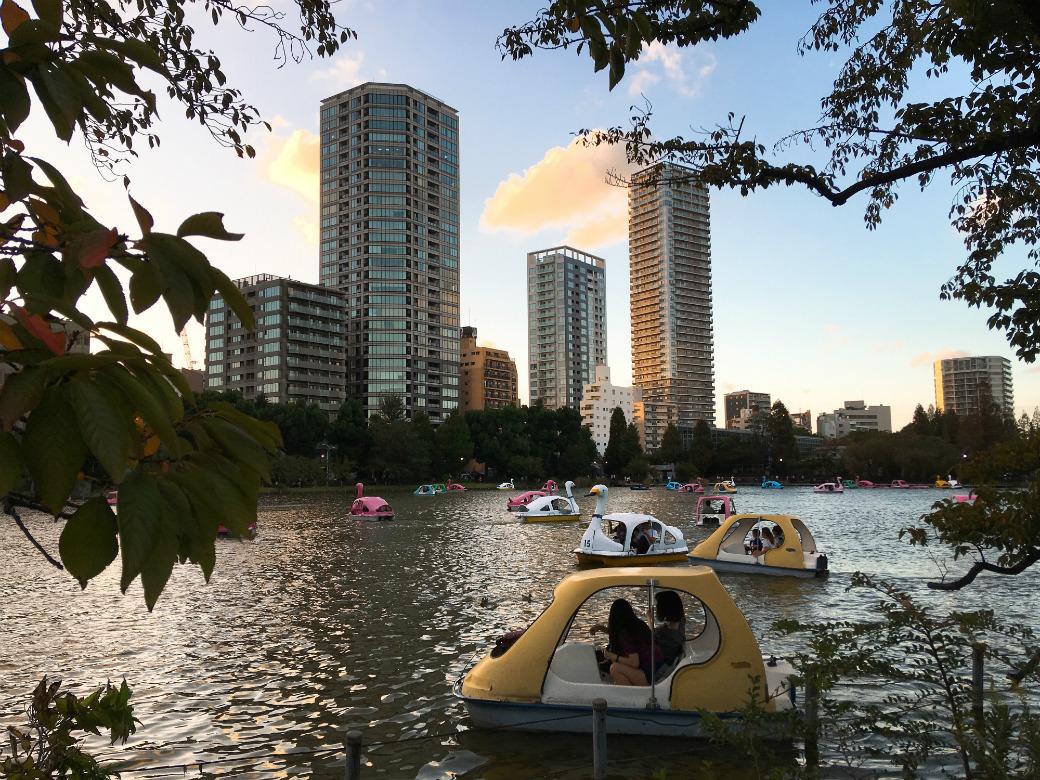 上野恩賜公園不忍池とあひるボート
