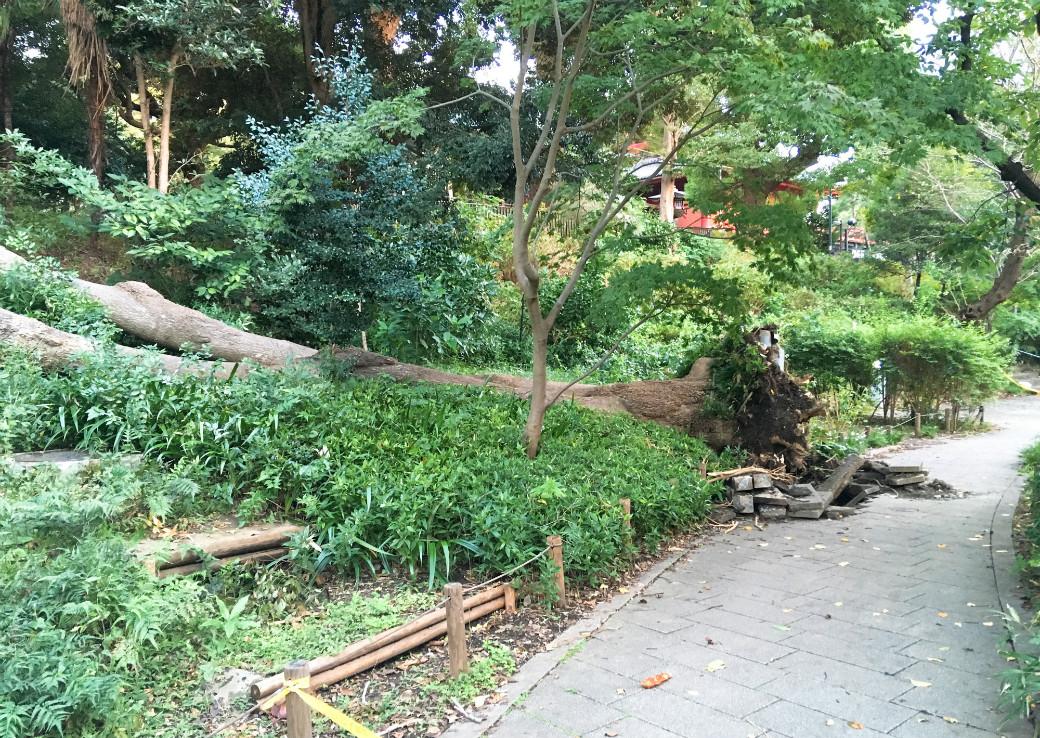 台風で倒れた上野公園の木