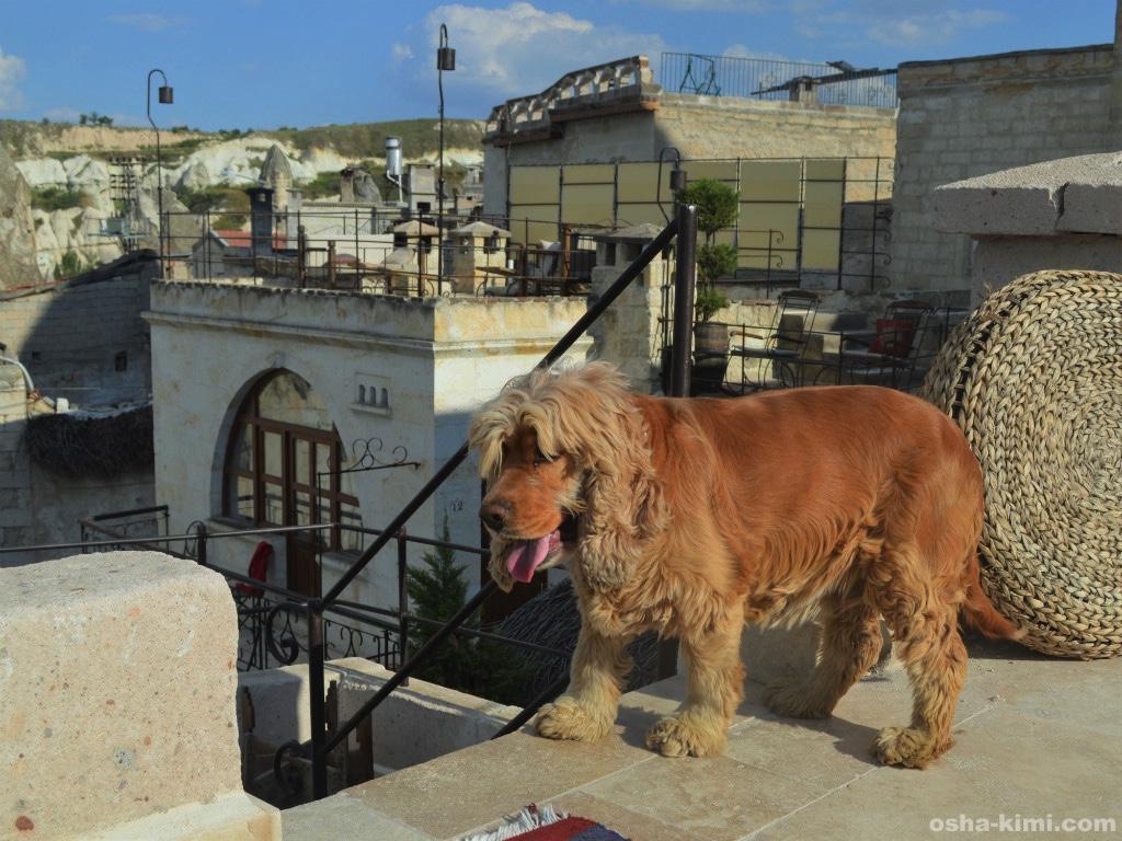 ミスラケーブホテルの看板犬
