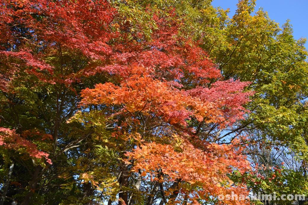 長瀞、宝登山ふもとの紅葉