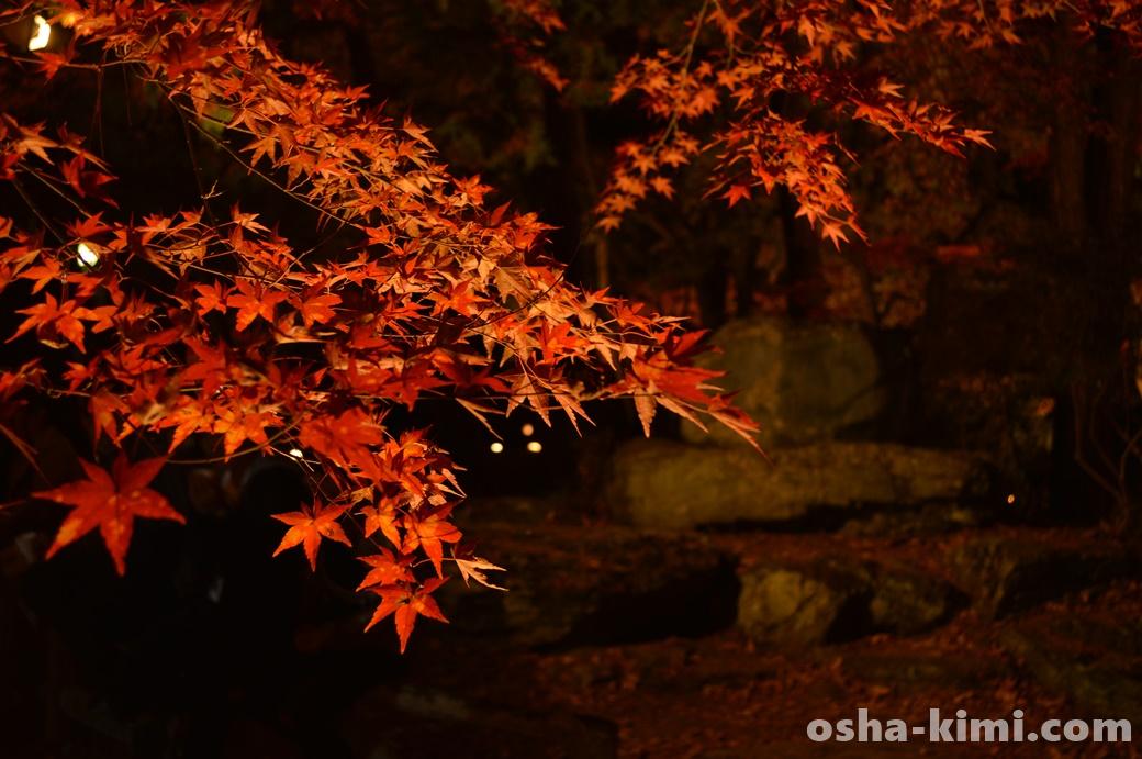 夜の紅葉も美しい