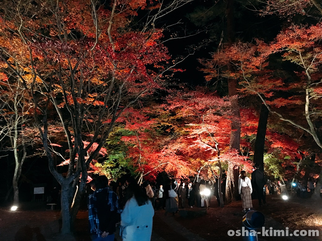 長瀞紅葉まつり月の石もみじ公園のライトアップ混雑