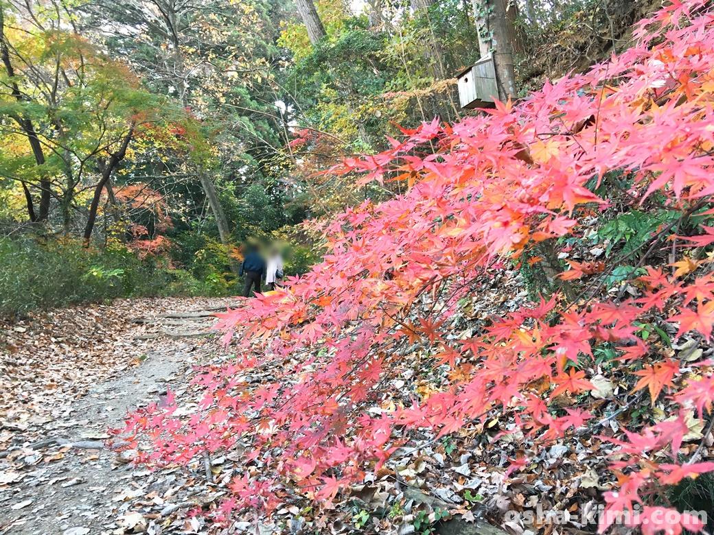小山にも秋の紅葉が訪れている