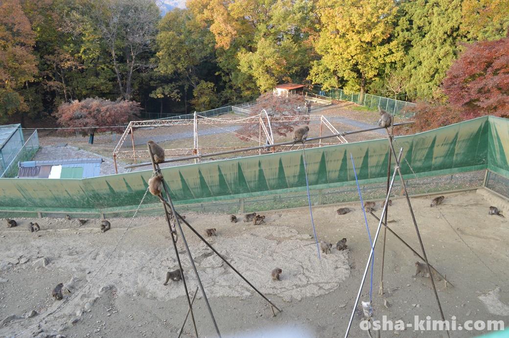 宝登山小動物公園のサル山