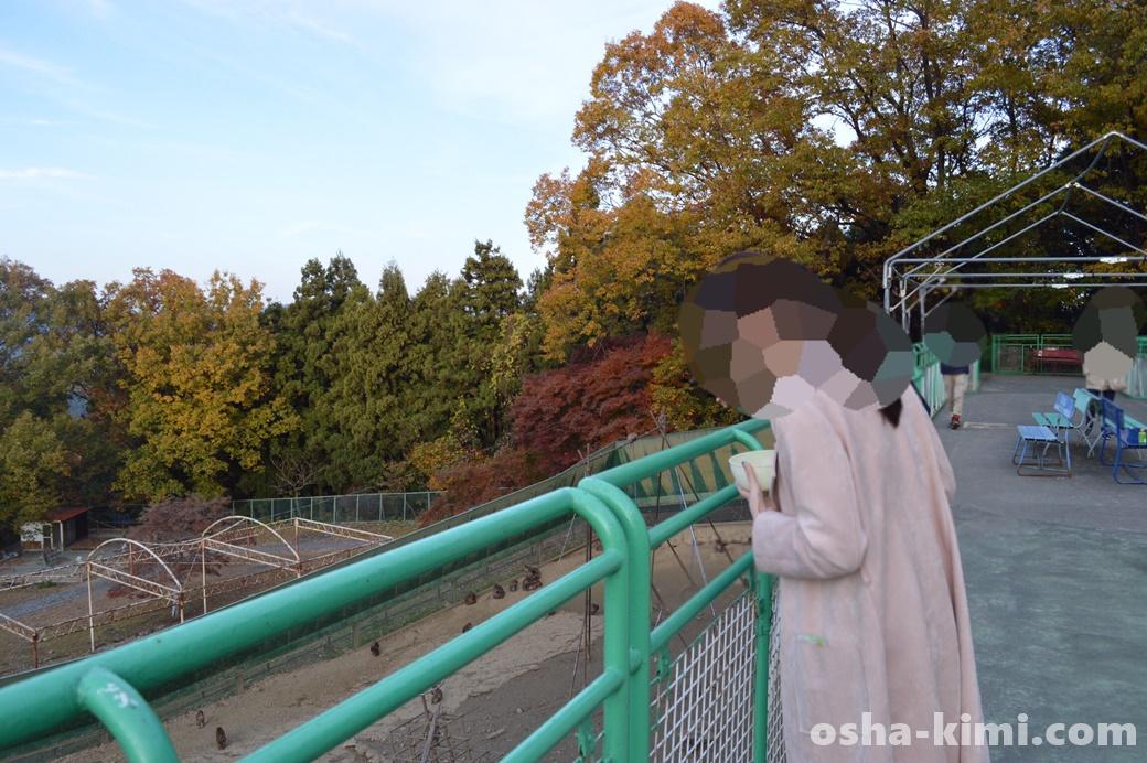 宝登山小動物公園の猿山、エサをやることができる