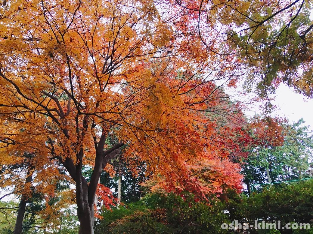 宝登山小動物公園から山頂へ歩く途中に見つけた紅葉