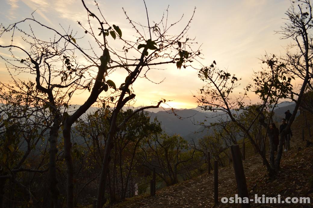 宝登山山頂の梅林からみた夕日